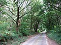 Road through Birch Hole and Barningham Green Plantations - geograph.org.uk - 543479.jpg