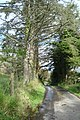 Road to Lettermore - geograph.org.uk - 974643.jpg