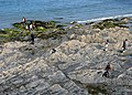 Rock pools - geograph.org.uk - 845249.jpg