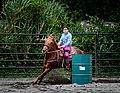 Rodeo in Panama 15.jpg