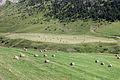 Rolos de herba entre Coll d'Ordino e Canillo. Andorra 27.jpg