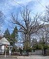 Rosedale Cemetery lower jeh.jpg