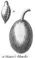 Rozier - Cours d'agriculture, tome 8, pl. 34, diaprée blanche.png
