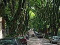 Rua Gonçalo de Carvalho.jpg