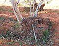 Rubbish piled around a tree.jpg