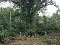 SAN PABLO - panoramio.jpg