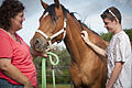 STAR Healing With Horses treats children with secondary PTSD 140617-A-ZU930-002.jpg
