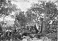 Saca de corcho 1895.jpg