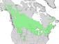 Salix bebbiana range map 3.png