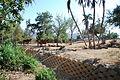 San Diego Zoo Safari Park 113 2014-08-29.JPG