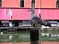 San Polo, 30100 Venice, Italy - panoramio (32).jpg
