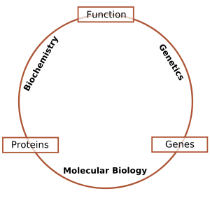 Schematic relationship between biochemistry, g...