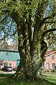 Schleswig-Holstein, Lutzhorn, Naturdenkmal 49-02 NIK 2934.JPG