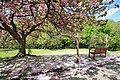 Seat in the Blossom - geograph.org.uk - 1291561.jpg