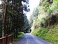 Shanlinxi Forest Road 杉林溪林道 - panoramio (1).jpg