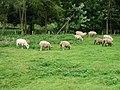 Sheep grazing in field near Ottinge - geograph.org.uk - 958270.jpg