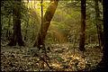 Shenandoah National Park SHEN9180.jpg