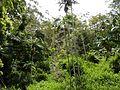 Sherwood Forest - panoramio - Daniel Ainsworth.jpg