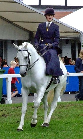 Sidesaddle - Woman riding in a modern English sidesaddle class.