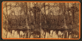 Silver Springs Run, Fla. Spearing fish, from Robert N. Dennis collection of stereoscopic views 2.png