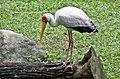 Singapore - Jurong Bird Park-16and (4458047339).jpg