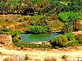 Siwa Oasis, Qesm Siwah, Matrouh Governorate, Egypt - panoramio (15).jpg