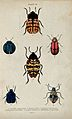 Six winged insects. Coloured engraving by W. H. Lizars. Wellcome V0020756ER.jpg