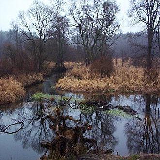Skarżysko-Kamienna - Image: Skarzysko kamienna rzeka