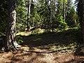 Skogsstig Savojärvi runt 2019.jpg