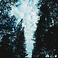 Sky View X.jpg