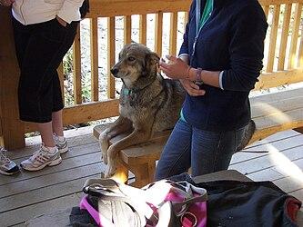 Sled Dog Discovery & Musher's Camp 26.jpg