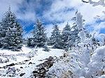 Snow (8692290868).jpg