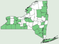 Solidago juncea NY-dist-map.png