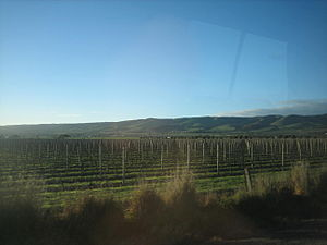 South Australian wine - Vineyards in rural South Australia
