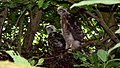 Sparrowhawk Nest 09-07-09 (4482444343).jpg