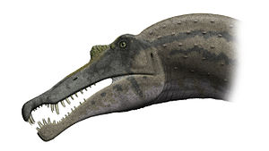 Spinosaurus - S. aegyptiacus head based on the 2005 Dal Sasso reconstruction