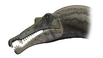 Spinosauridae - Life restoration of the head of Spinosaurus