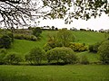 Spring in Ceredigion - geograph.org.uk - 1325739.jpg