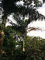 Sta Branca - Fazendao - São Paulo, Brasil - panoramio (9).jpg