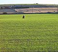 Standing stone in a field near Meikle Eddiestone Farm - geograph.org.uk - 671990.jpg