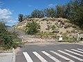 Starr-070207-4324-Calotropis procera-habit-Maui Lani Kahului-Maui (24882074605).jpg