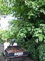 Starr 080716-9407 Unknown fabaceae.jpg