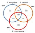 Streptococcus gene overlap.png