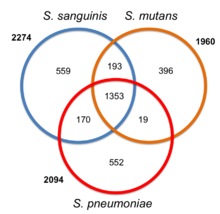 common and species-specific genes among streptococcus sanguinis, s  mutans,  and s  pneumoniae  modified after xu et al  (2007)