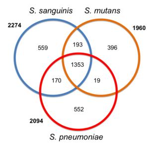 Streptococcus - Image: Streptococcus gene overlap