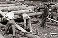 Sušilnica lesa tovarne lesovine in lepenke v Podvelki 1955.jpg