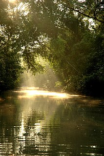 Sundarbans The worlds largest mangrove forest located in the delta of Ganges, Meghna and Brahmaputra rivers in the Bay of Bengal
