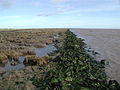 Sunk Island Sands - geograph.org.uk - 323852.jpg