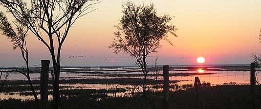 Sunset on Doñana marshes.JPG