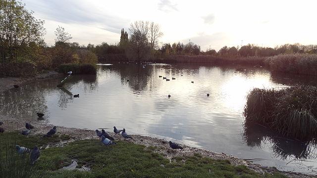 Sutcliffe Park_1